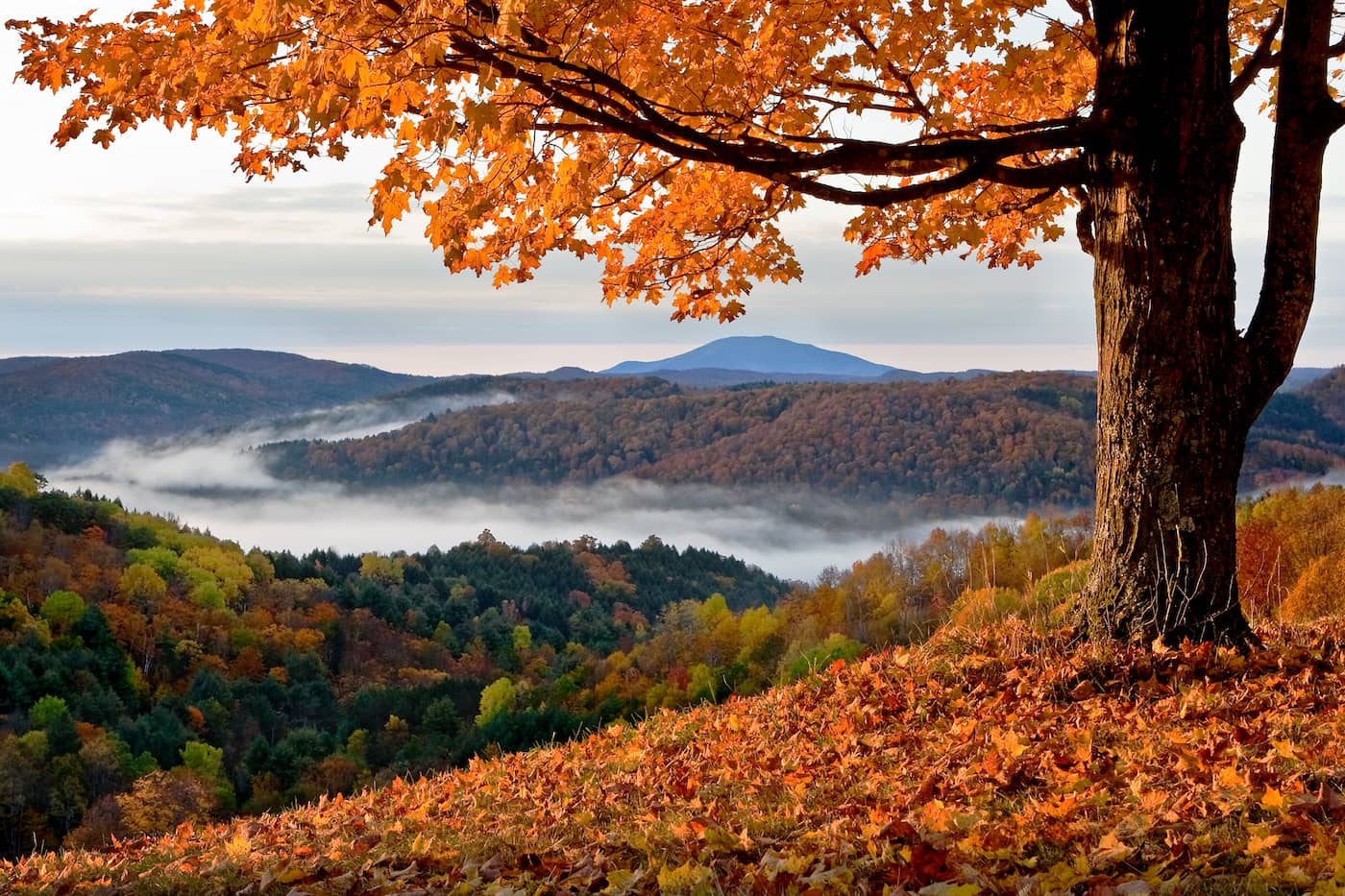 Counseling Degree Programs in Vermont